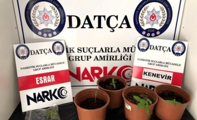 Datça'da Uyuşturucu Baskını Düzenlendi