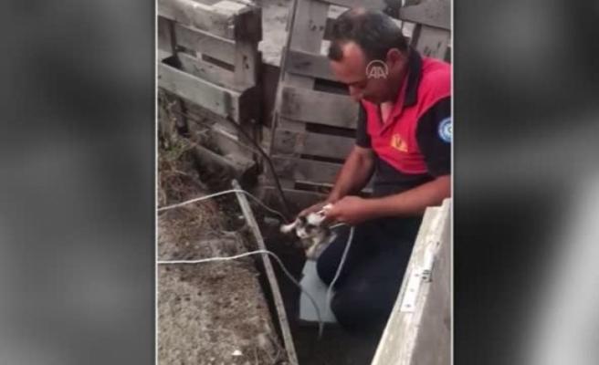 Bodrum'daki Kuyuya Düşen Kedi Yavrusu Kurtarıldı