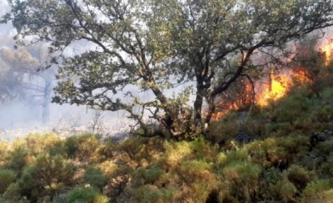 Fethiye Çıkan Orman Yangını Büyümeden Söndürüldü