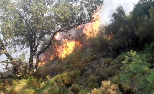 Fethiye'de Çıkan Yangında 5 Dönüm Ormanlık Alan Zarar Gördü