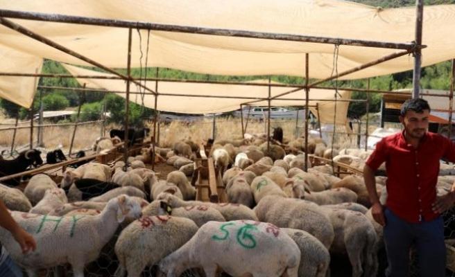 Marmaris'teki Kurban Satış Yerleri Belirlendi