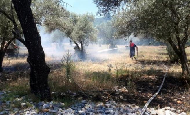 Menteşe'de Zeytinlik Yangını