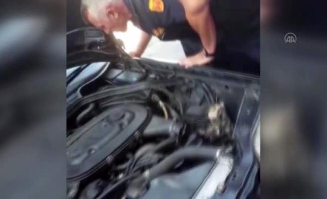 Yatağan'daki Otomobilin Motoruna Giren Yılan Çıkarıldı