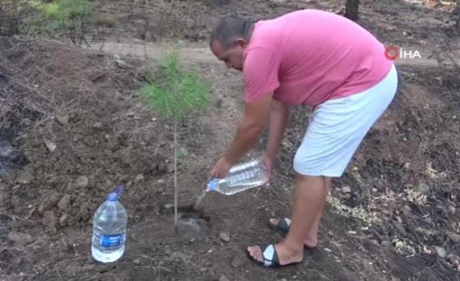 4 Bin Ağaç Tohumunu Marmaris'te Yanan Ormanlar İçin Paylaşmak İstiyor