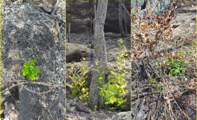 Marmaris ve Datça'da Doğa Yeniden Canlanmaya Başladı