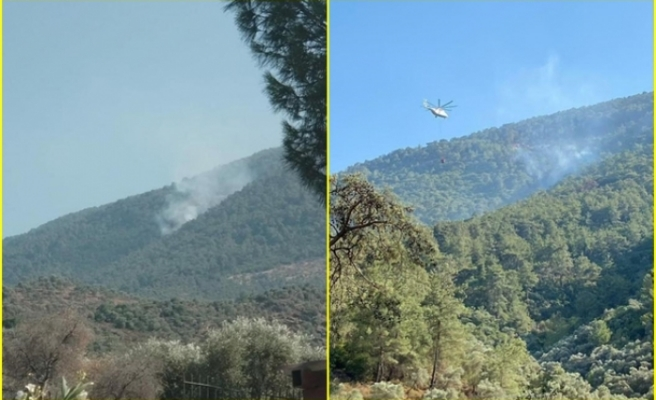 Milas'ta Çıkan Orman Yangını Büyümeden Kontrol Altına Alındı