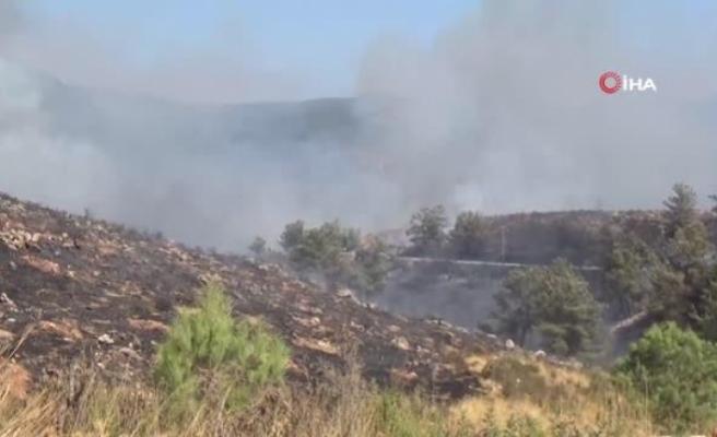 Bodrum'da Çıkan Yangında 13 Hektar Alan Küle Döndü