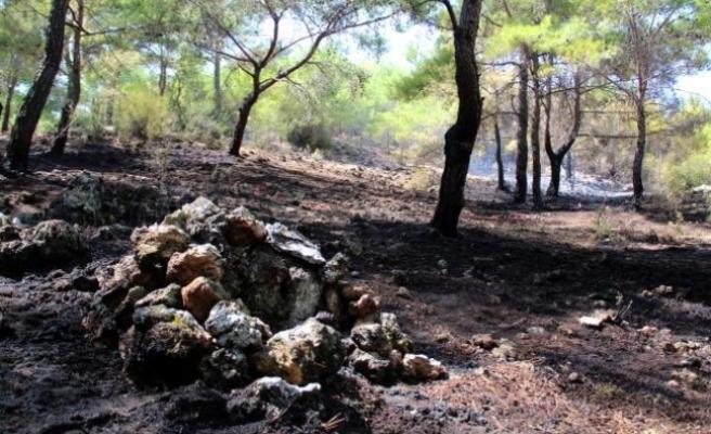 Cengiz Holding, Yangın Bölgelerinde Yaraları Sarıyor