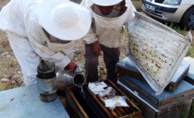Muğla'da Üreticiler Arıların Ölmemesi İçin Mücadele Veriyor