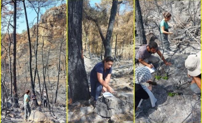 Muğla'da Yanan 'Özel Bölgeler' İçin Ekolojik Kurtarma Operasyonu