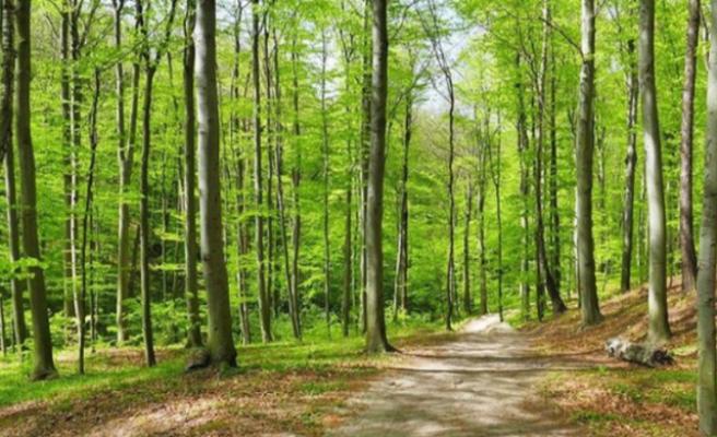 Ormanlara Giriş Yasağı Uzatıldı!
