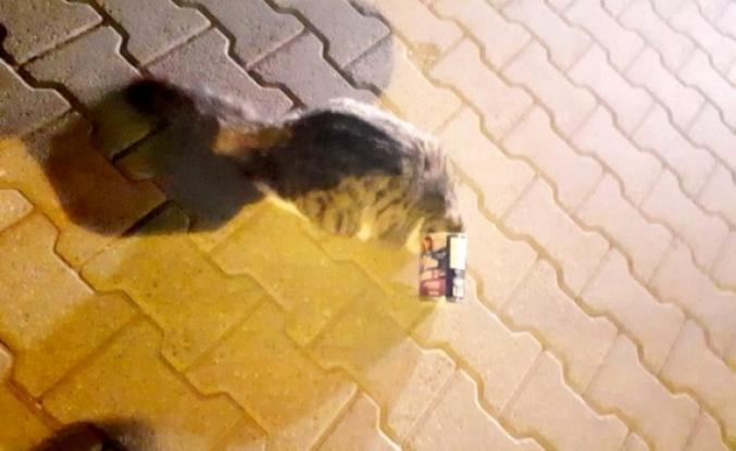 Fethiye'de, Kafası Mama Kutusuna Sıkışan Kedi Kurtarıldı