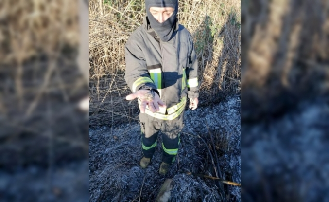 Muğla'da İtfaiye Eri Yanan Alandan Kaplumbağa Yavrusu Kurtardı