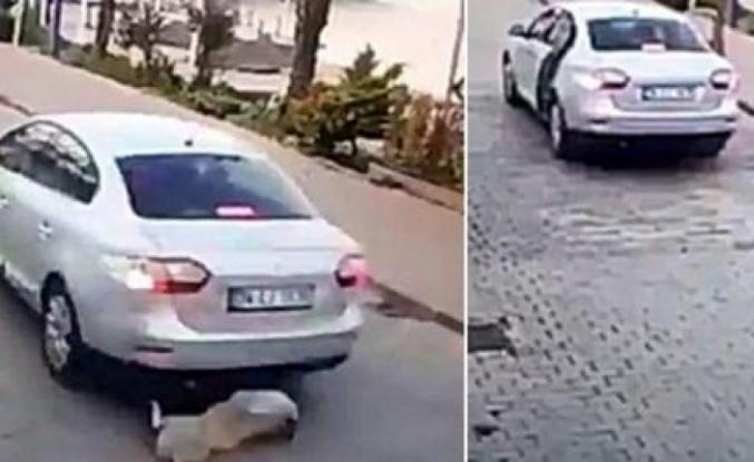 Bodrum'da Köpeğe Çarpan Sürücü Önce Baktı Sonra Kaçtı!