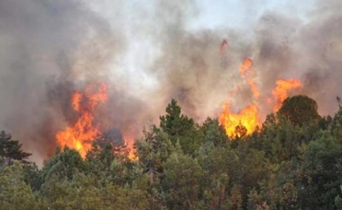 Muğla'da Çıkan Orman Yangınına Müdahale Ediliyor!