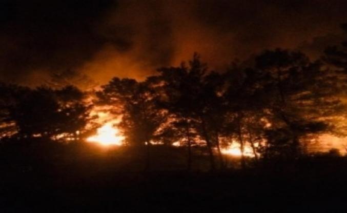 Muğla'da Yangında 5 Hektar Orman Alanı Zarar Gördü