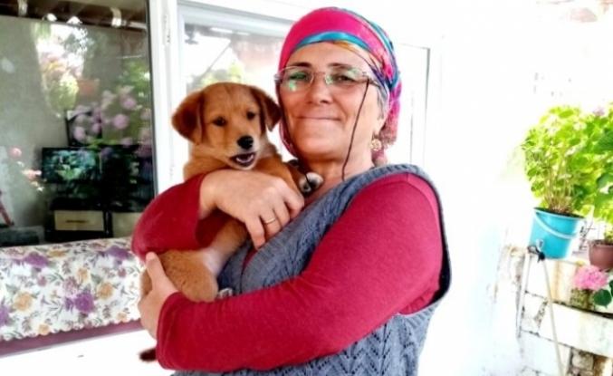 Menteşe'de Çalınan Köpek, Sahibine Teslim Edildi
