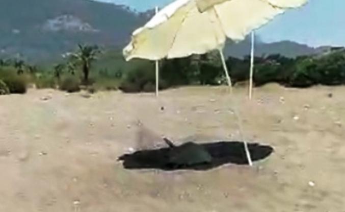 Yuva Yapan Caretta Carettayı Güneşten Plaj Şemsiyesiyle Korudu