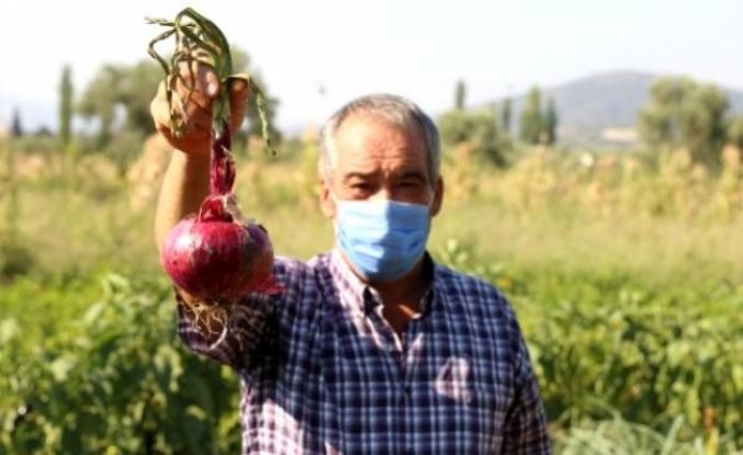 Yatağan'da Üretilen 736 Gramlık Soğan Şaşırttı