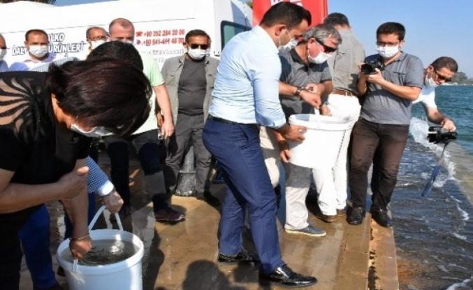 Köyceğiz Gölüne 100 Bin Sazan Yavrusu Bırakıldı