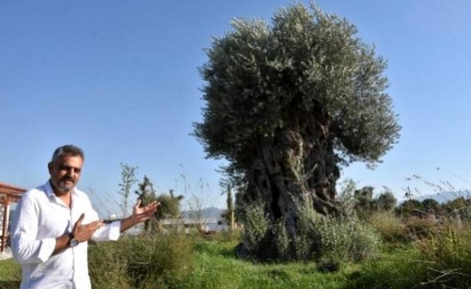Muğla'da 'Zeytin Park' İlgi Çekiyor