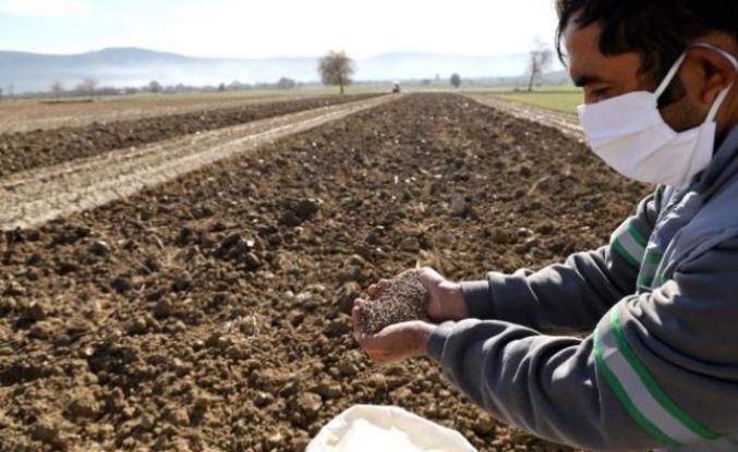 Menteşe Belediyesi Hayvan Yetiştiricisi İçin Yem Bitkisi Üretiyor