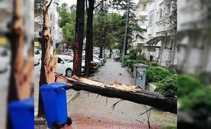 Menteşe'de Fırtına Ağaç Devirdi
