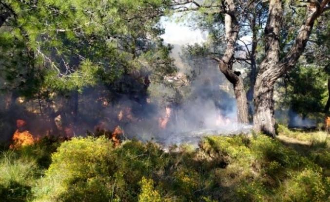 Fethiye'de Çıkan Orman Yangını Büyümeden Söndürüldü
