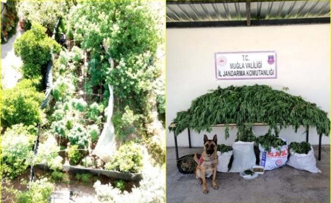 Fethiye'de Jandarma'dan Uyuşturucu Operasyonu