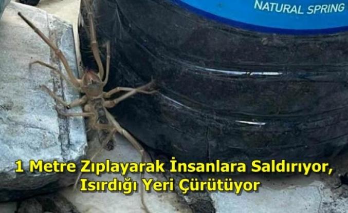 Yatağan'da Et Yiyen Örümcek Paniğe Neden Oldu!