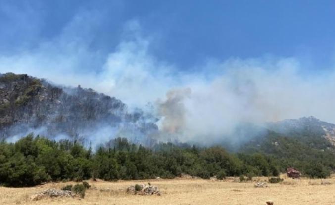 Antalya'da Orman Yangınına Sebep Olan 7 Turist Tutuklandı