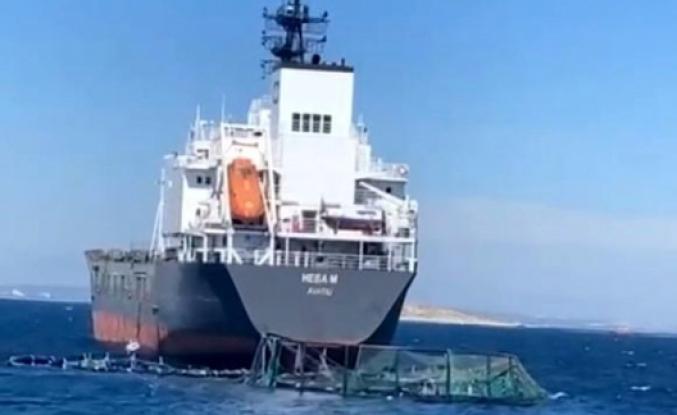 Milas'ta Yük Gemisi Balık Havuzuna Girdi!