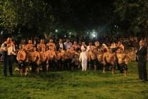 MİLAS'TA SÜNNET DÜĞÜNÜ İÇİN 350 PEHLİVANLI GÜREŞ DÜZENLENDİ