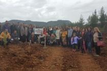 Muğla'da 500 Öğretmen 2 Bin Fidan Dikti