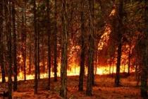 """""""Ormanlarımızı Korumak Görev Değil Sorumluluktur"""""""