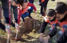 Öğrenciler 150 Adet Zeytin Fidanı Dikti