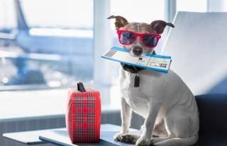 Evcil Hayvanla Yolculuğa İlişkin Yeni Düzenleme