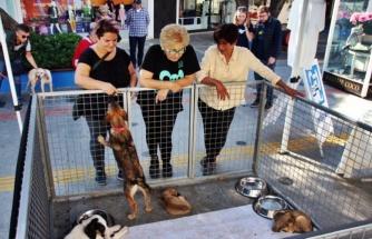 Bodrum'da Sokak Hayvanları Sahiplendiriliyor