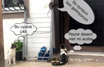 Kedilerden Kaçan Fare Çamaşır Asacağına Çıktı