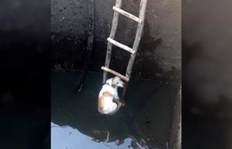 Kuyuya Düşen Köpeği İtfaiye Kurtardı