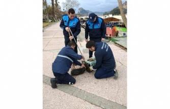 Dalyan Kanalı'na Düşen Yaralı Kedi Kurtarıldı