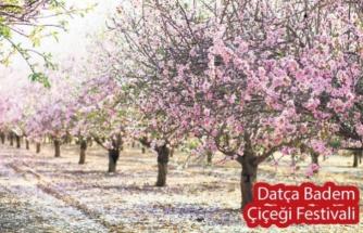 Datça 'Badem Çiçeği Festivali' ile Bahara Merhaba Diyecek!