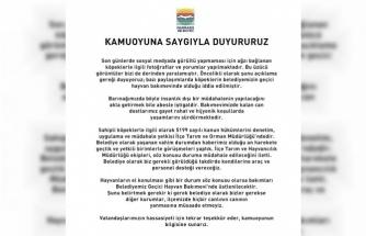 Marmaris Belediyesi'nden Sokak Hayvanları Duyurusu