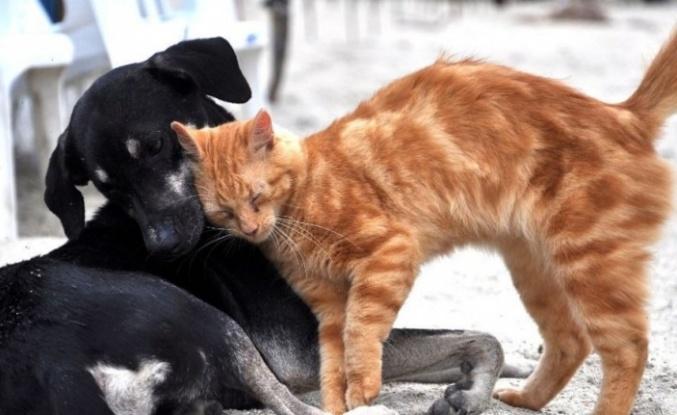 """TBMM'de """"Hayvan Hakları Raporu"""" Görüşüldü"""